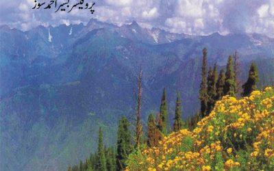 Hazara Mein Hindko Zabaan-o-Adab Ki Taarikh